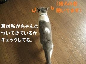 IMG_0324.jpg