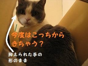 IMG_0471.jpg