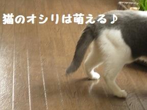 IMG_0482.jpg
