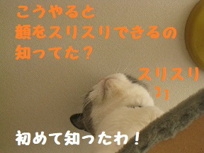 IMG_0529.jpg