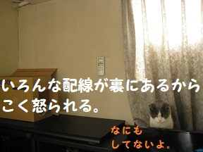 IMG_0707.jpg
