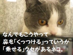 IMG_0709.jpg