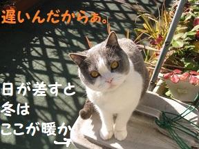 IMG_4249.jpg