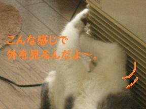 IMG_8633.jpg