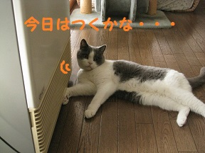 IMG_8748.jpg