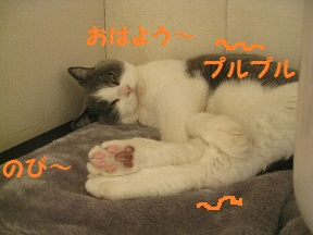 IMG_8762.jpg