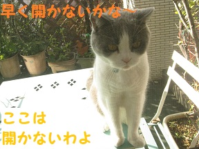 IMG_9204.jpg
