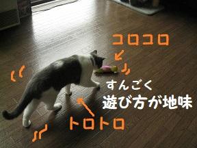 IMG_9368.jpg