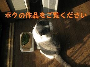 IMG_9748.jpg