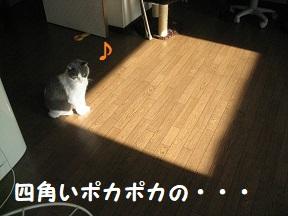 IMG_9762.jpg