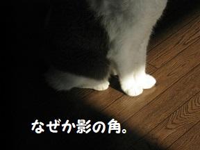 IMG_9763.jpg