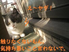 IMG_9829.jpg