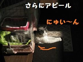 IMG_9918.jpg