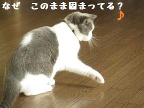 IMG_9967.jpg