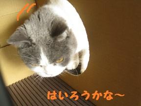 box1 (2).jpg