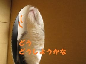 box1 (3).jpg