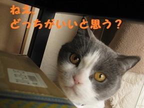 box1 (4).jpg
