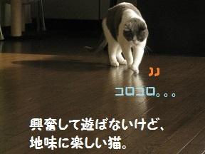IMG_7348.jpg