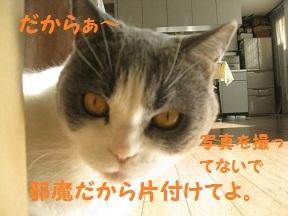 IMG_7444.jpg