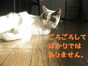 IMG_7459.jpg