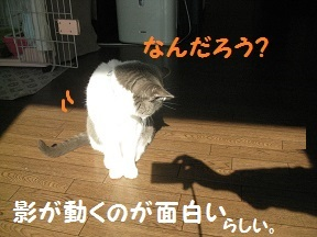 IMG_7533.jpg