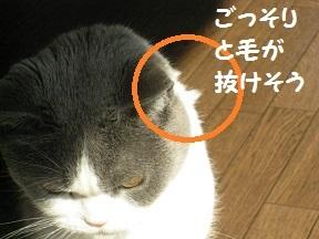 IMG_7574.jpg