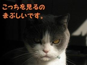 IMG_7575.jpg