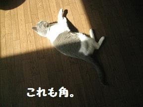 IMG_7634.jpg
