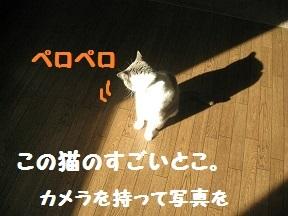 IMG_7661.jpg