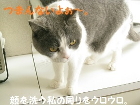 IMG_7900.jpg