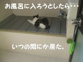 IMG_8033.jpg