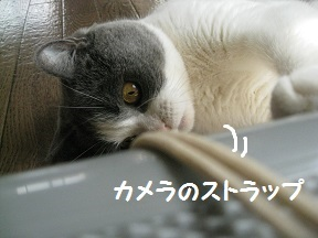 IMG_8050.jpg