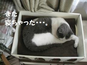 IMG_8191.jpg