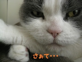 IMG_8213.jpg
