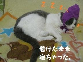 IMG_8237.jpg