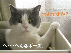 IMG_8300.jpg