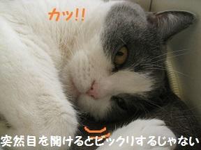 IMG_8321.jpg