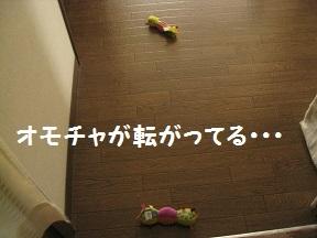 IMG_8373.jpg