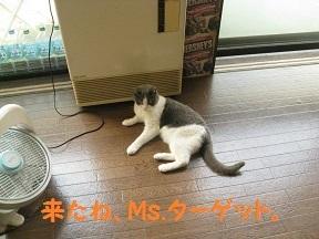 IMG_8438.jpg