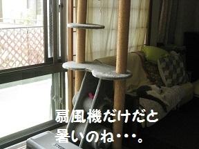 IMG_8494.jpg