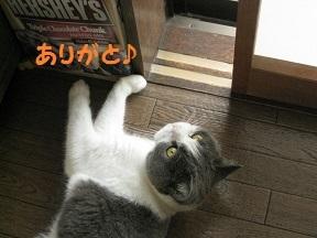 IMG_8538.jpg