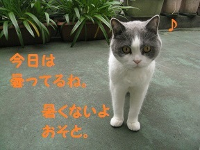IMG_8598.jpg