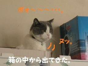 acyu (1).jpg