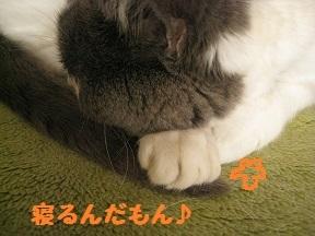 chippo (2).jpg
