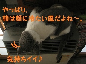 coolday (4).jpg
