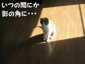 kadoh (2).jpg