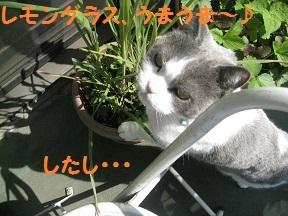 rest (1).jpg