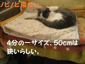 sema1 (4).jpg