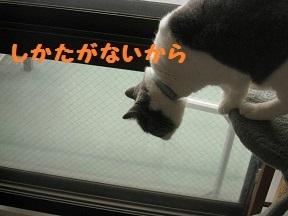 tsumanai (3).jpg