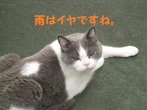 るるるん (1).jpg